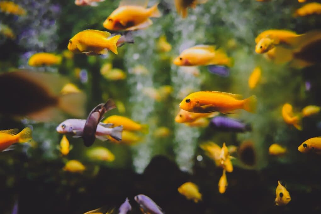 Read more about the article What is Blind Fish or Can Blind Fish Survive in Aquarium?