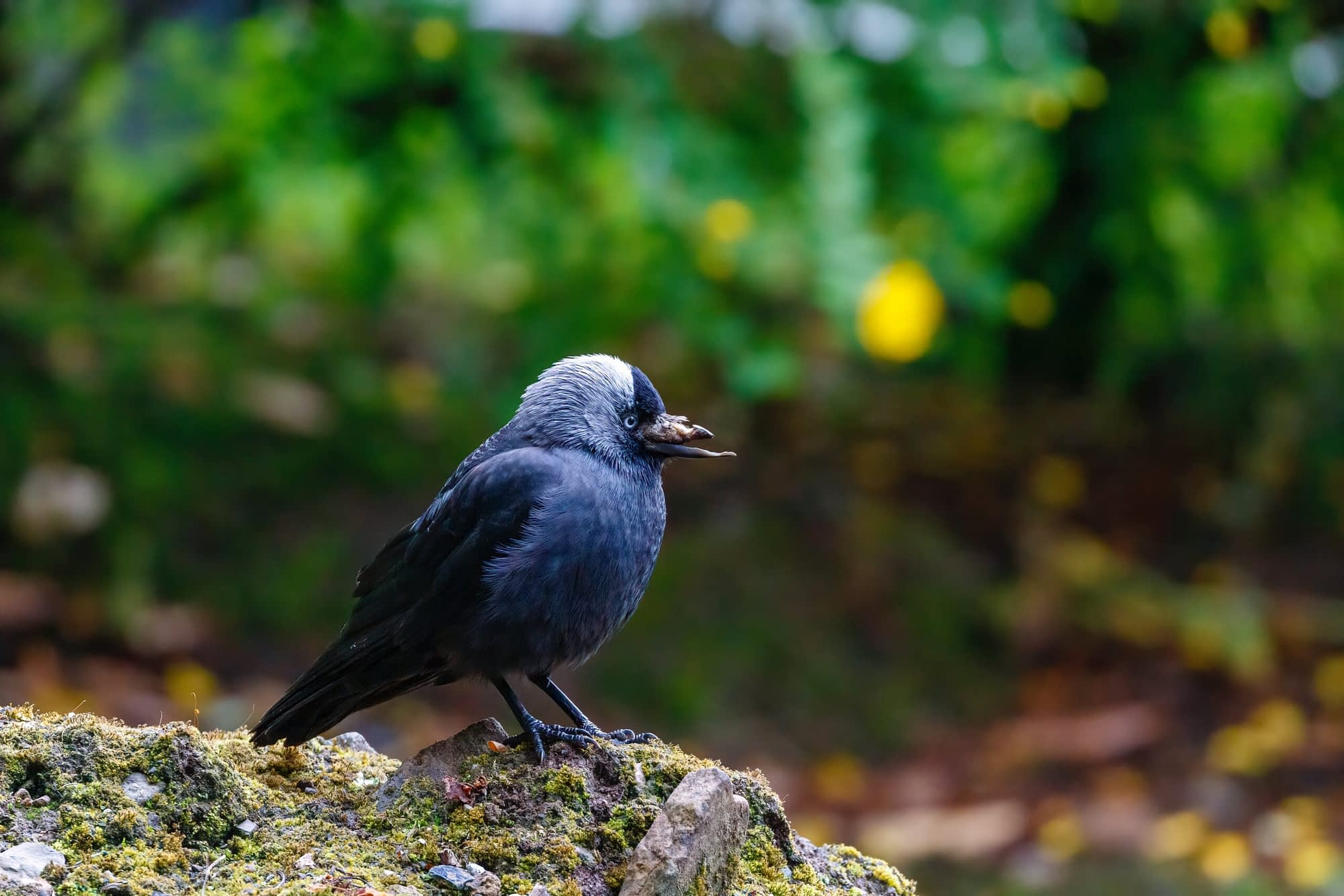 Read more about the article How Do I Save a Baby Bird Of The Crow or What do you do if you find a baby bird?