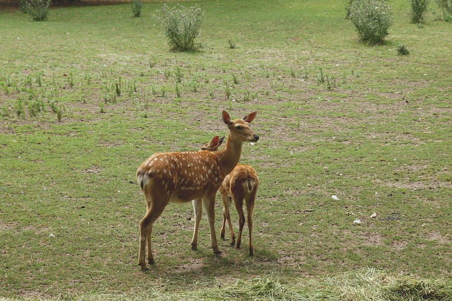 kids story time once upon a time a deer baby girl get stubborn