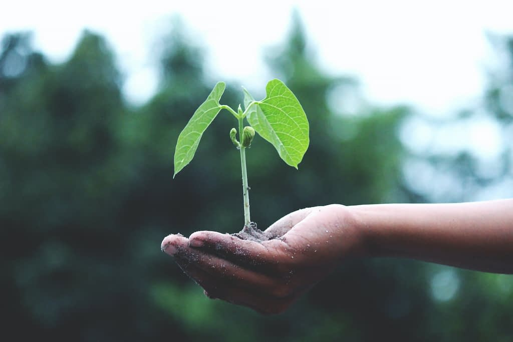 Seedling Without Soil